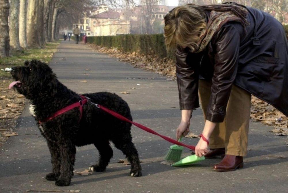 Decoro e salute pubblica.  Regole di comportamento per gli accompagnatori di cani in luoghi pubblici